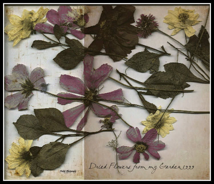 Dried Flowers for Texture Tuesday