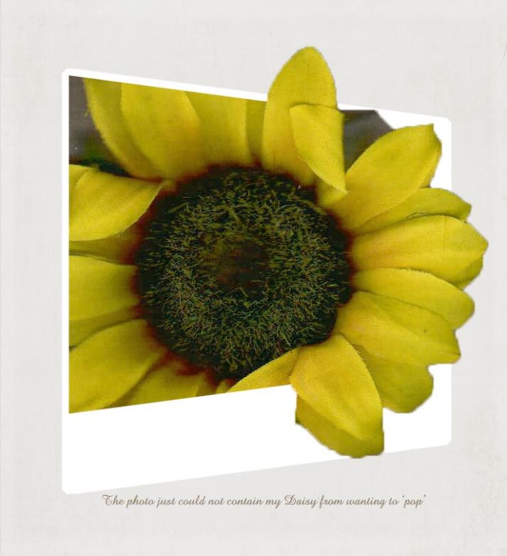 daisy mine for POP texture tuesday