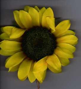 daisy mine