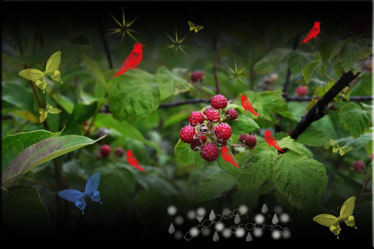 Berries 'n Nature