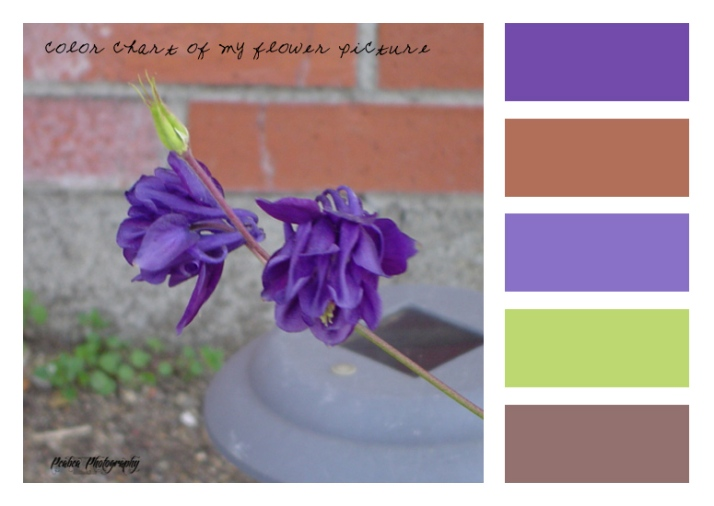 blue flower from Iris color bar copy