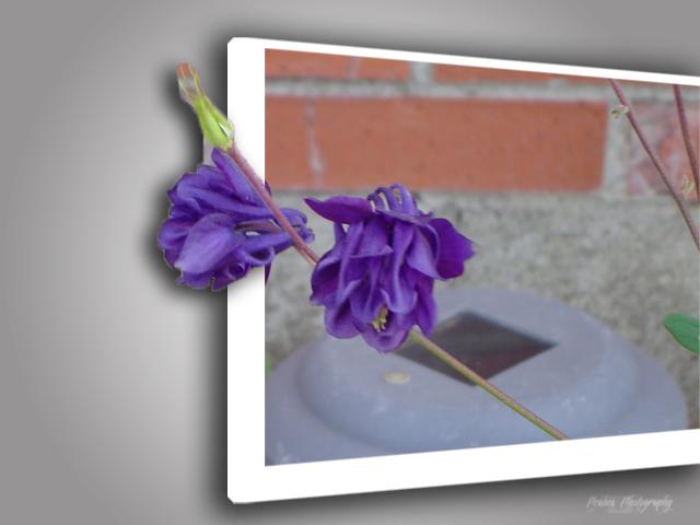 iris-flower-outofbounds
