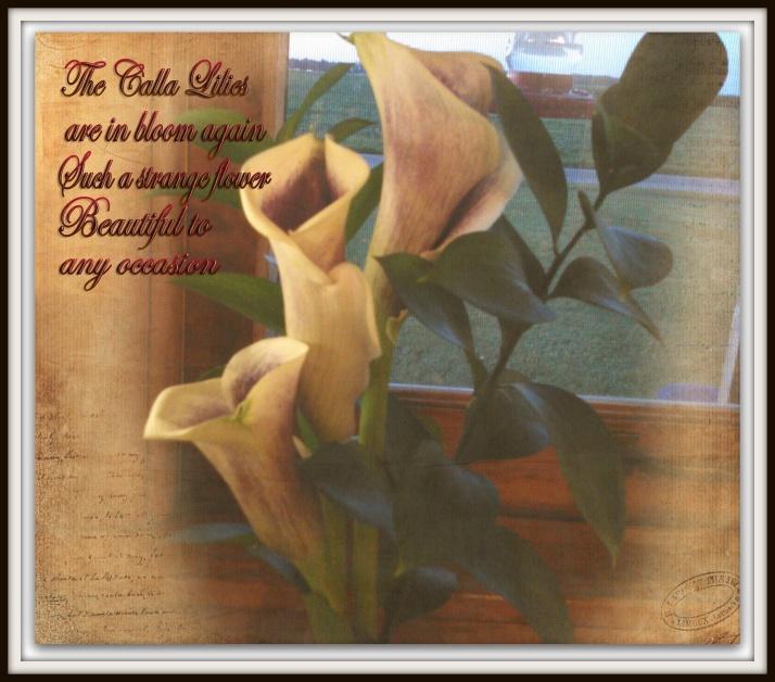 calla lilies for TT framed