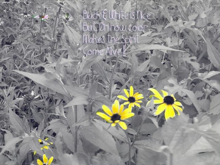 Iris Yellow Flower bw w color TT