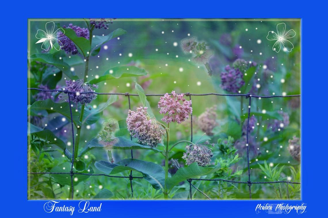 Milkweed fantasy land