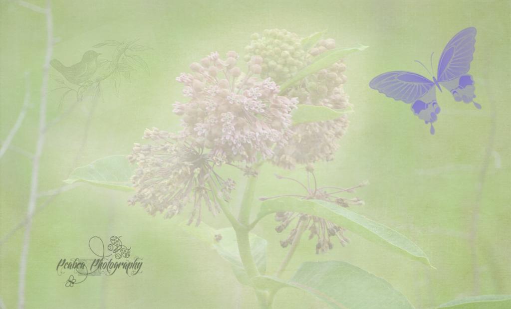 milkweed for TT n RJ
