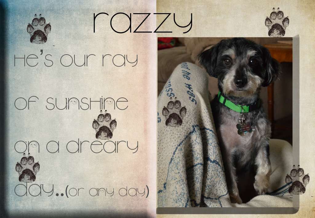 razzy ray of sunshine