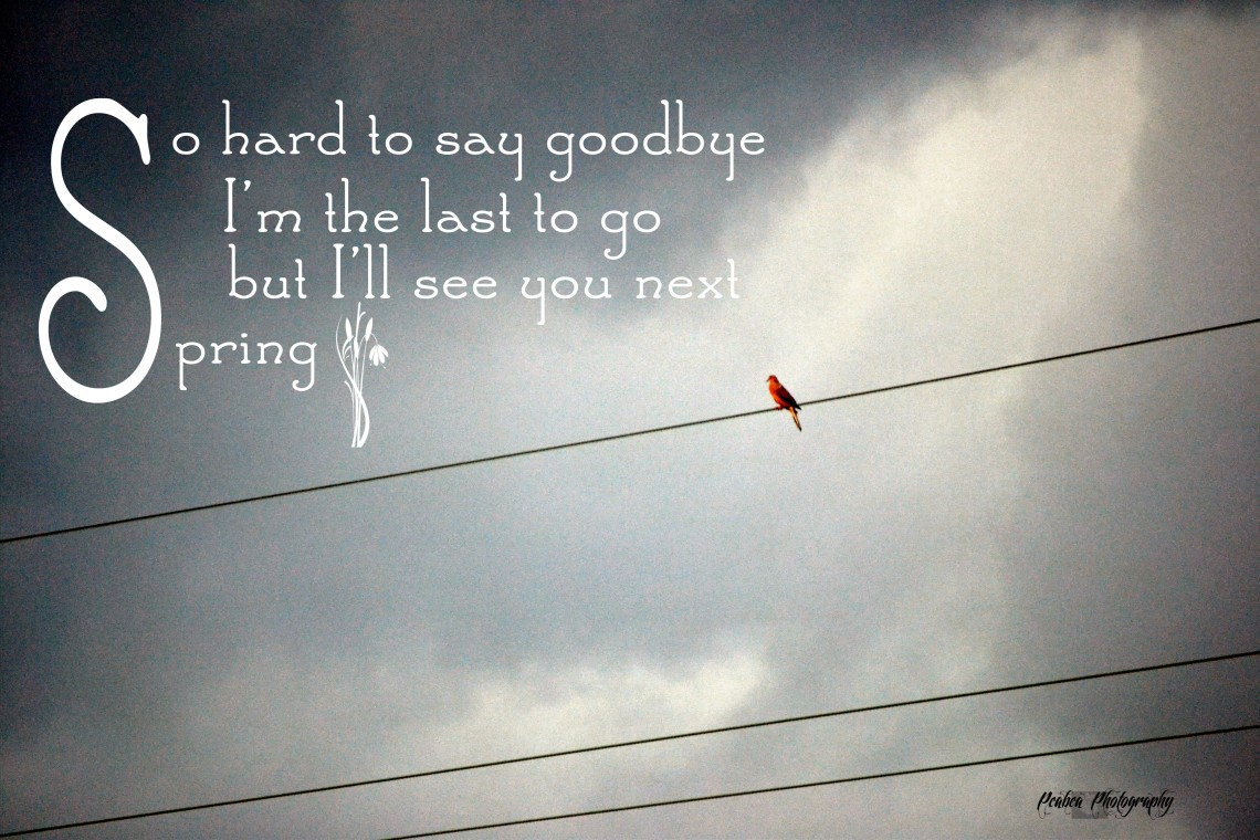 Bird on Wire front see you next spring