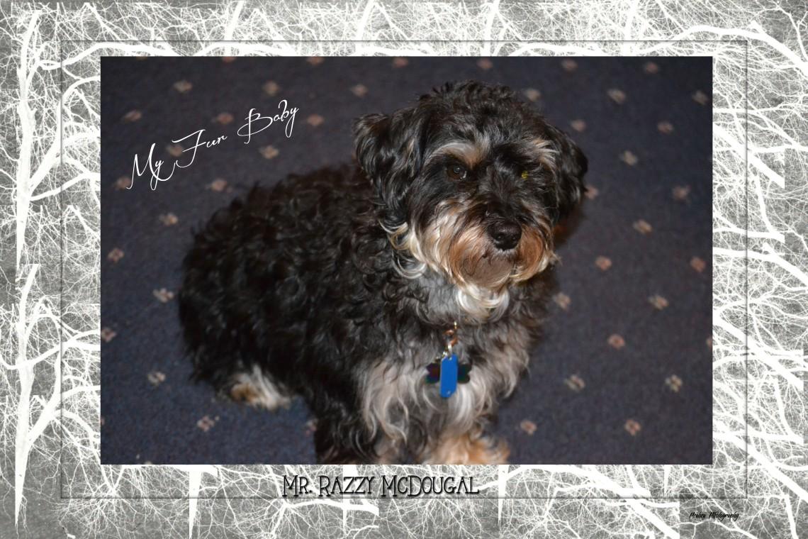 Mr Razzy McDougal 2
