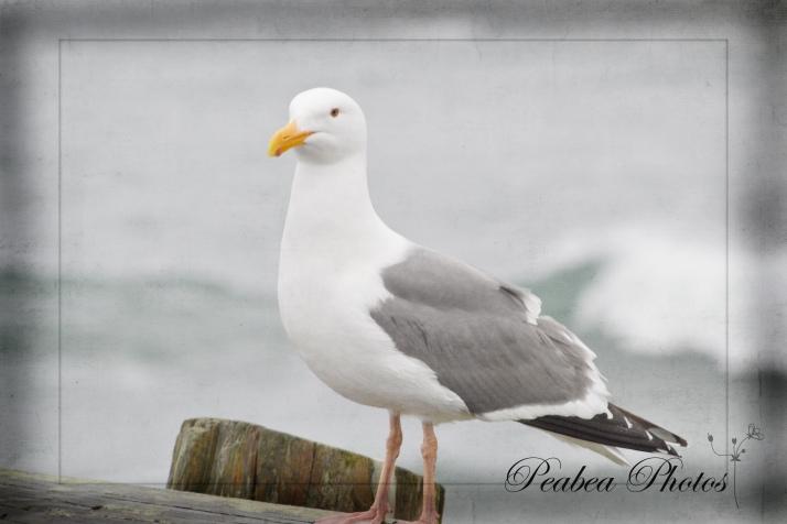 Bird at Bodega Bay Textured