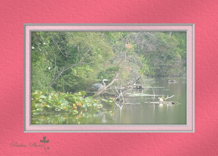 Heron at Lake for Stretch