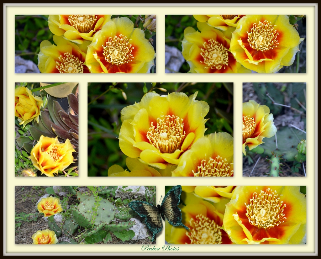 Cactus Blooms n Lilly collage framed