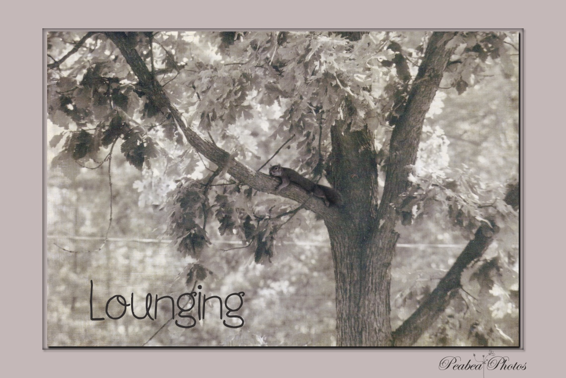 Lounging-squirrel in tree