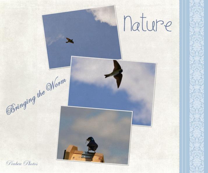 Nature for TT