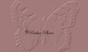 pb_butterfly