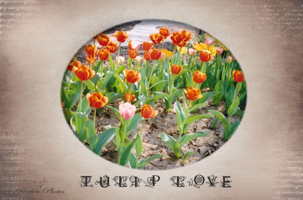 Tulip Love for Floral Love