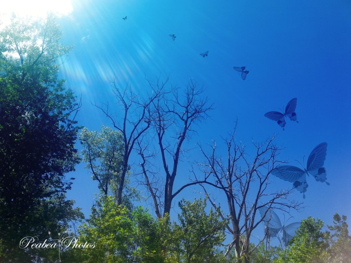 trees n butterflies for TT