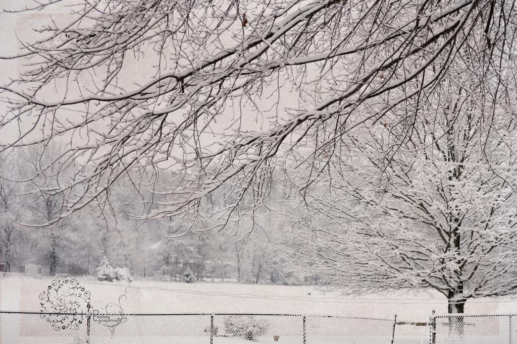 Winter Scene w carmel for TT