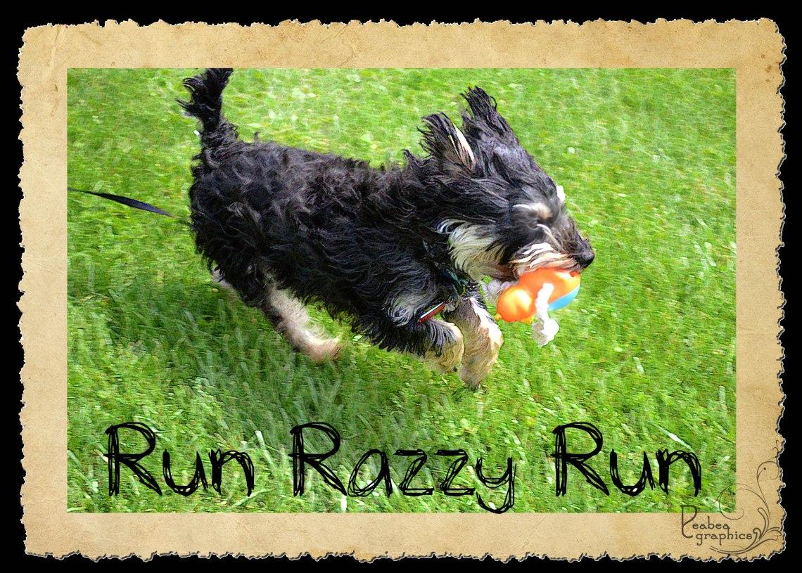 Run Razzy Run