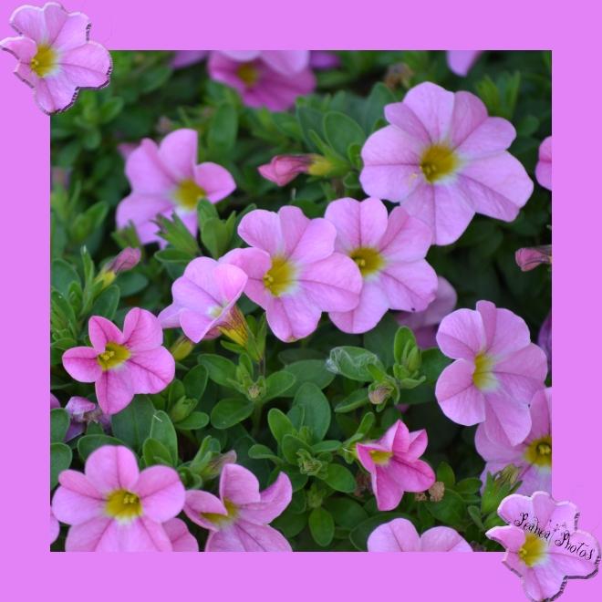 flowers on purple frame