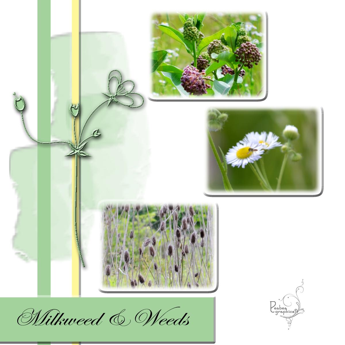 Milkweed & Weeds in Green clip mask