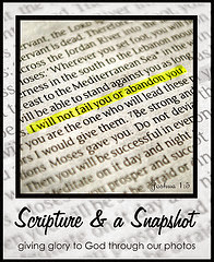 Scripture & A Snapshot