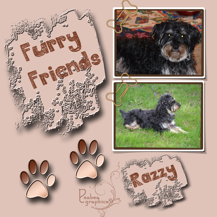 Furry Friend Razzy_edited-2