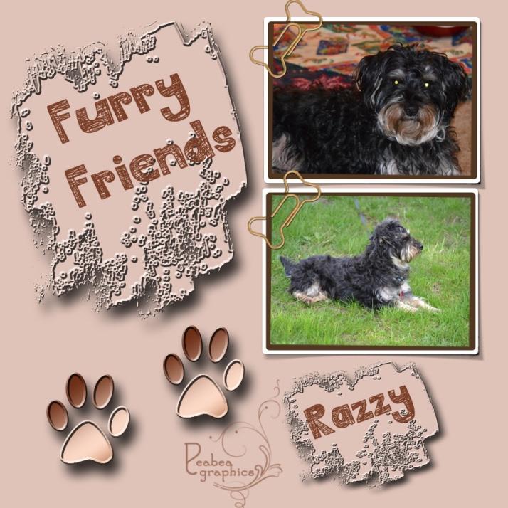 Furry Friend Razzy_edited-2