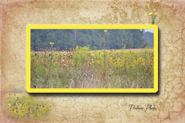 Yellow Weed on French Kiss Caquelure BG
