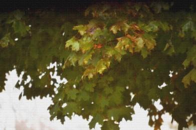 Leaf Tree Texturized