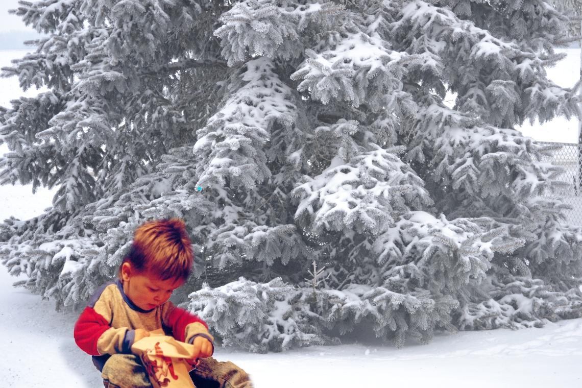Cody cmas tree