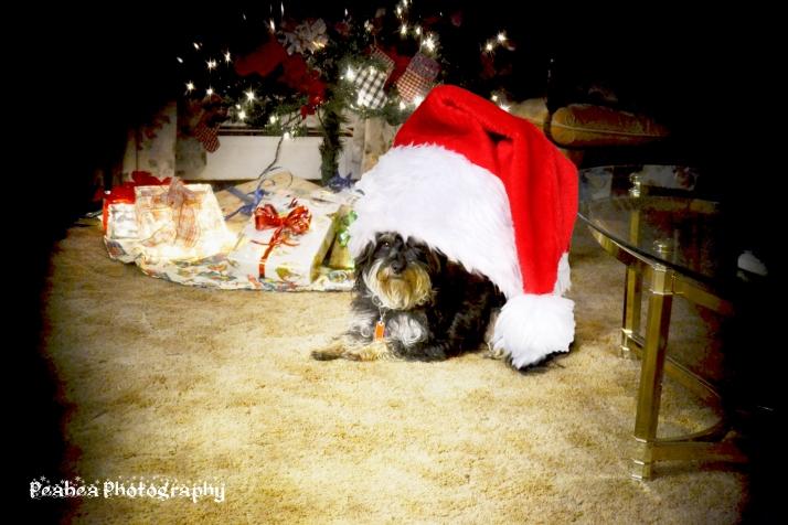 Cmas Razzy 2015 w santa hat