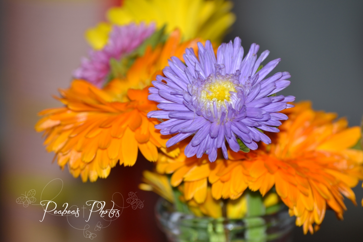 vase-road-flowers-for-pictorial-9-24