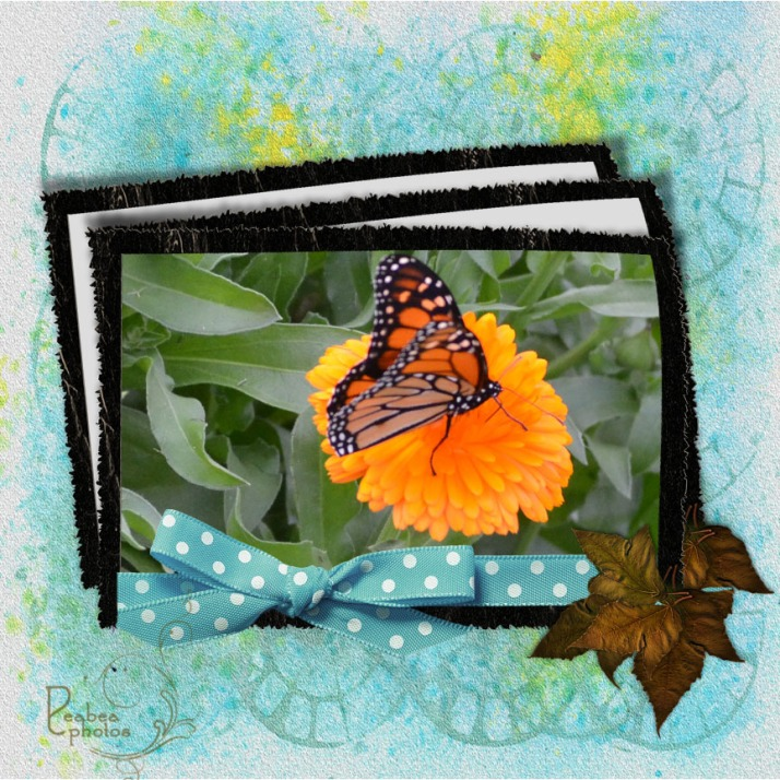 butterfly-in-frame-with-blue-ribbon