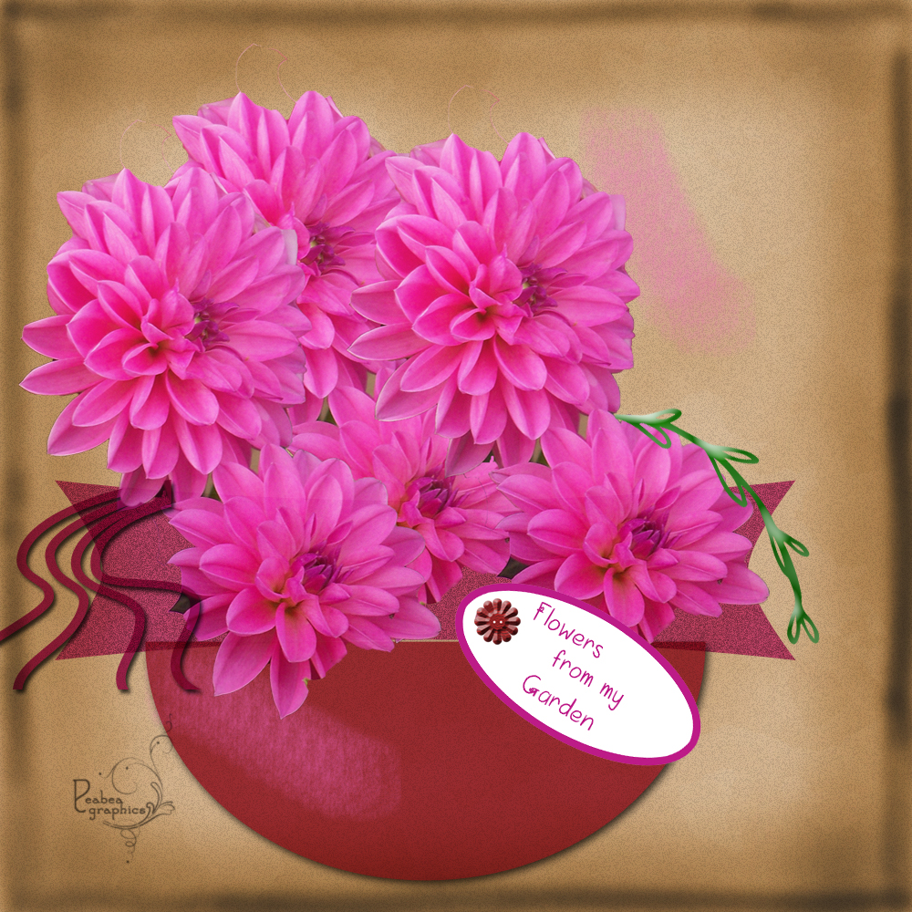 Dahlia Flowers From Garden 2417