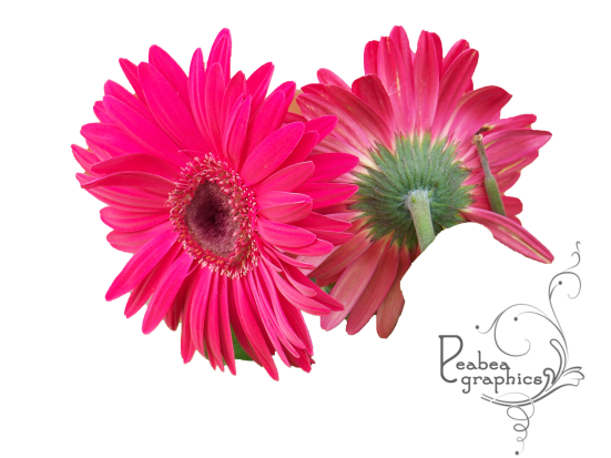 Red Daisy Type Flower May 2017 w logo